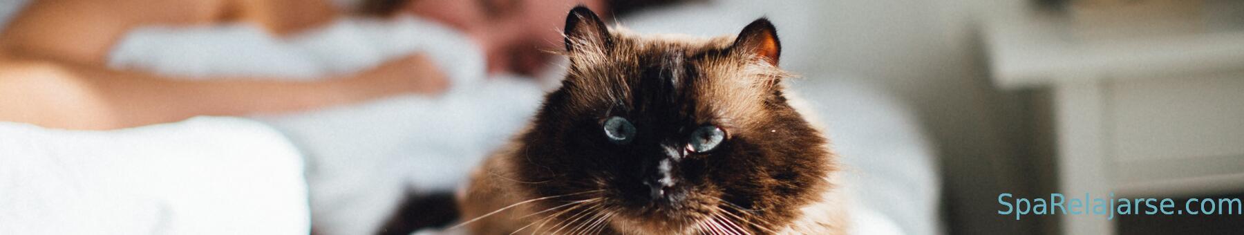 Los 3 mejores spas para ir con tu gato